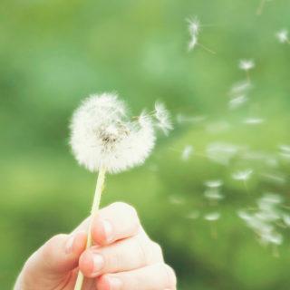 una-primavera-atipica-para-los-alergicos-al-polen