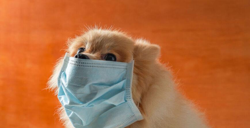 me-puede-contagiar-el-perro