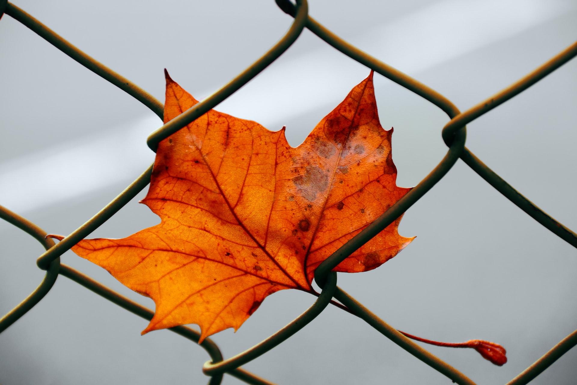 ¿Cómo nos preparamos para el otoño?